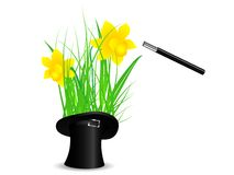 Daffodils in top hat Royalty Free Stock Images