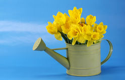 Yellow Daffodils with Blue Sky Stock Photos