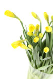 Yellow daffodils bouquet Stock Photography
