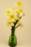 Yellow Daffodils Bunch Stock Images