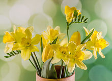 Yellow daffodils and freesias flowers in a colored vase, close up Royalty Free Stock Image