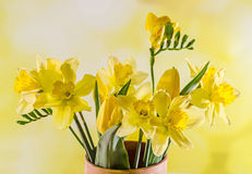 Yellow daffodils and freesias flowers in a colored vase, close up, isolated, yellow degradee background. Stock Photo