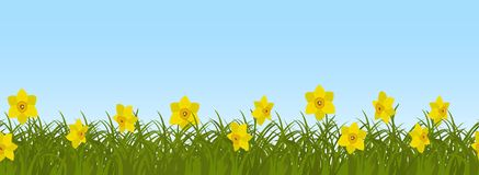Yellow daffodils in green grass on a blue sky background. Seamless border. Yellow daffodils in green grass on a blue sky background. Border. Spring flowers. It Royalty Free Stock Photos