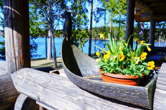 Yellow daffodils (narcissus,jonquil) and pansies in spring. Beautiful yellow daffodils (narcissus,jonquil) and pansies in small wooden boat for home decoration royalty free stock photography
