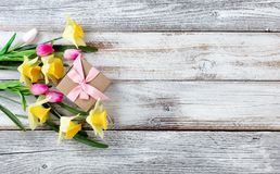 Yellow daffodils and pink tulips with gift box on white weathere Royalty Free Stock Image
