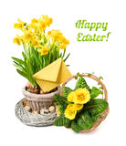 Yellow daffodils and primrose on white background, Happy Easter! Royalty Free Stock Photos