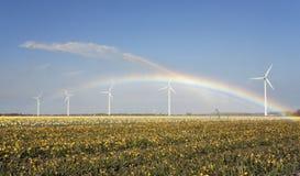Yellow daffodils and rainbow stock photography