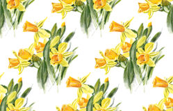 Yellow daffodils Royalty Free Stock Image