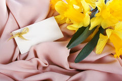 Yellow daffodils in the silk Stock Images