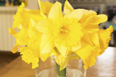 Yellow daffodils on a table in the living room Royalty Free Stock Photography