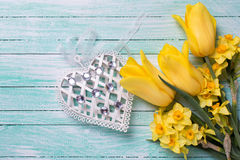 Yellow daffodils and tulips flowers and decorative heart  Royalty Free Stock Photo