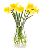 Yellow daffodils in a vase Stock Image