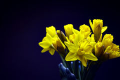 Yellow Daffodils in a Vase Stock Photo