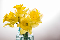 Yellow dafodills in blue jar Royalty Free Stock Photos