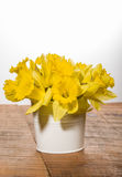 Yellow dafodills in white bucket Royalty Free Stock Images