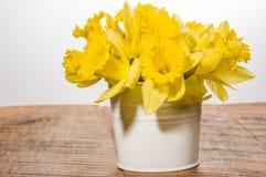 Yellow dafodills in white bucket Stock Image