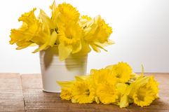 Yellow dafodills in white bucket Royalty Free Stock Photos