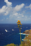 Yellow Daggar plant over looking sail boats at Antigua Royalty Free Stock Photo