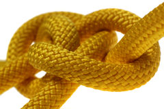 Yellow dagger knot closeup. Royalty Free Stock Photography