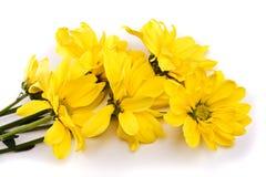 Yellow daises Royalty Free Stock Photos