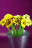 Yellow Daises Stock Photography