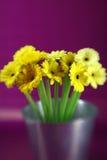 Yellow Daises Stock Photography