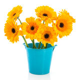 Yellow daisies Stock Photography