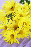Yellow daisies Stock Photo