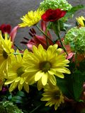 Yellow daisies. Daisy arrangement Royalty Free Stock Photos