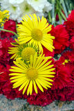 Yellow daisies. Stock Images