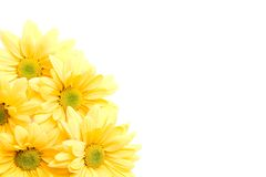 Yellow daisies corner Royalty Free Stock Image