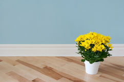 Yellow daisies decorating a room Stock Image