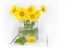 Yellow daisies in a glass jar with water Stock Photos