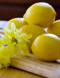 Yellow daisies and lemons Stock Photography
