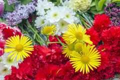 Yellow daisies and red carnations. Stock Photos