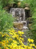 Yellow daisies and waterfall Royalty Free Stock Image