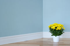 Yellow daisies in white pot decorating a room Stock Photography