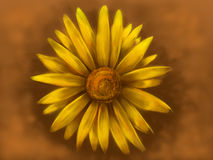 Yellow Daisy. Image of a yellow daisy against a brown background Royalty Free Stock Images