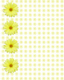 Yellow daisy background Royalty Free Stock Photo