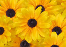 Yellow Daisy Background Stock Image