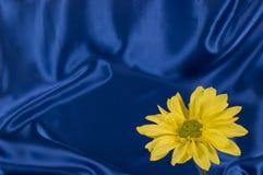 Yellow Daisy On Blue Satin Background Royalty Free Stock Photos