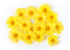 Yellow daisy. Bouquet of yellow daisies isolated on white Stock Photography