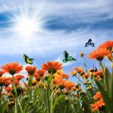 Yellow daisy with butterflies Royalty Free Stock Photos