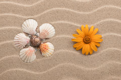 Yellow daisy and chamomile made from seashells lying on dunes. Stock Photos