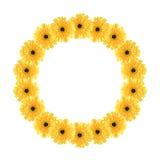 Yellow daisy circle frame Stock Image