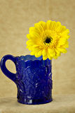 Yellow Daisy in Cobalt Cup Stock Images