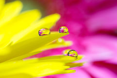 Yellow daisy colors in water drops (1) Royalty Free Stock Image