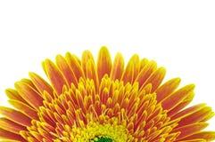 Yellow daisy flower royalty free stock photos