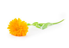 Yellow daisy flower Royalty Free Stock Images