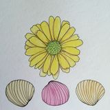 Yellow Daisy flower and sea shells pen and ink drawing Stock Photo